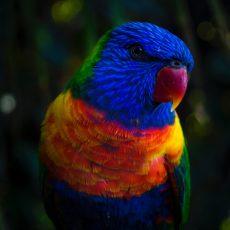 Pre vtáky