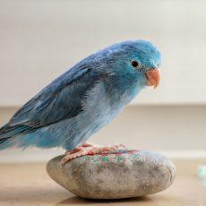 Doplnky pre vtáky