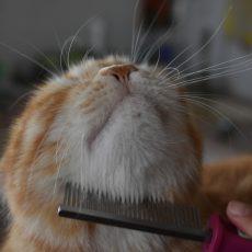 Kefy/hrebene/kliešte pre mačky