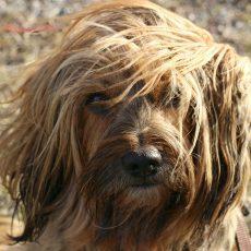 Kefy/hrebene/kliešte pre psov