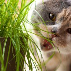 Pochúťky pre mačky