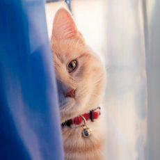 Obojky/postroje/vodítka pre mačky