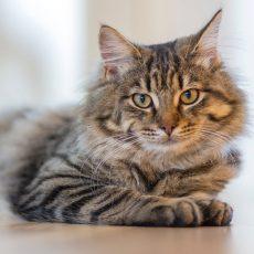 Podstieľky pre mačky