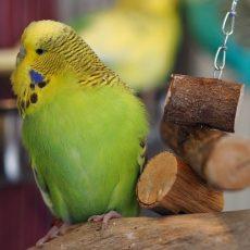 Hračky pre vtáky