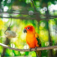 Klietky/hniezda a domčeky pre vtáky